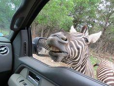 Natural  Wildlife  Ranch.... New Braunfels Texas  ..... Photo by Linda Anderson