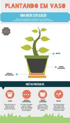 Mini horta em casa! Guia básico de como cultivar os temperos mais utilizados na cozinha