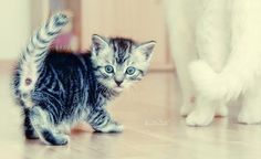 CuteBabyAnimals-Photo01
