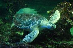 #Tartaruga - #Tortoise