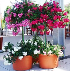 Best 12 Colorful decorating ideas for your balcony Patio Trees, Patio Plants, Outdoor Planters, Garden Planters, Balcony Flowers, Flower Planters, Flower Pots, Bougainvillea Tree, Flower Dance