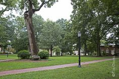 This large tree marks the spot where, as legend has it, Revolutionary War General William R. Davie selected the site for the University. Actually, a six-man committee from the University's first governing board chose the site on December 3, 1792.  The massive tree has been struck by lightning and survived several hurricanes, including the damage caused in 1996 by Hurricane Fran. Davie Poplar Jr., grown from a cutting, and Davie Poplar III, grown from the eldest tree's seed, are planted…