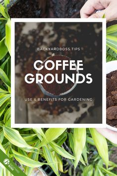 Coffee grinds make perfect compost because they are high in nitrogen, but you want to remember to combine them with other materials to get a nutritional balance. This article will show you everything you need to know about using coffee in gardening.