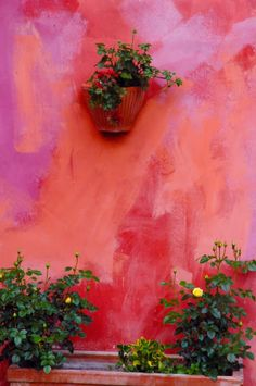 Blooming Desert's Daily Dirt: Orange and Pink in the garden