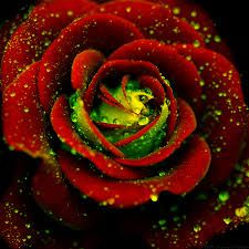 Cheap flower seeds, Buy Quality flowering bush seeds directly from China flower flower Suppliers: Heirloom Big Blooming Red Green Rose Bush Flower Seeds, Professional Pack, 50 Seeds / Pack, Strong Fragrant Climbing Flowers Flowers Gif, Pretty Flowers, Rose Flowers, Ronsard Rose, Climbing Flowers, 3d Rose, Macro Flower, Rainbow Flowers, Home Garden Plants