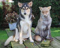 by M Smits Doge, Husky, Friendship, Animals, Animales, Animaux, Animal, Animais, Husky Dog