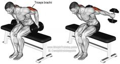 Seated bent-over two-arm dumbbell kickback exercise