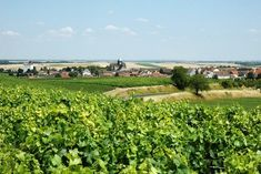 Vineyard, Champagne, France, Outdoor, Outdoors, Vine Yard, Vineyard Vines, Outdoor Games, The Great Outdoors