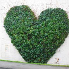 Ivy Heart - Bellingham, WA