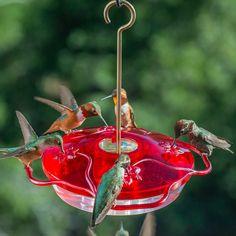 Resultado de imagen para hummingbird feeder