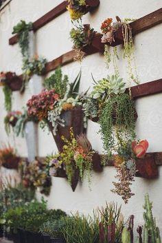 www.editionlocal.com >> Succulent Wall Garden by Nicholas Roberts