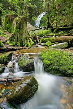 ✯ City Falls - Seattle