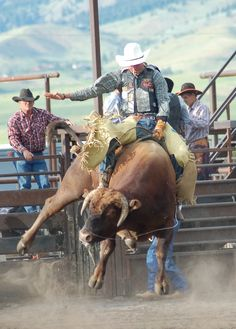 Rodeo Riding in Wyoming USA