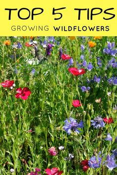 By Mary H. Dyer, Master Naturalist and Master Gardener So you've decided to plant a wildflower garden. Where do you start? Here are our top 5 tips for wildflowers in the garden. 1. Select the best seed for your area.Read this artice