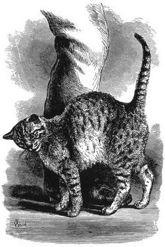 "Figure 10 from Charles Darwin's The Expression of the Emotions in Man and Animals. Caption reads ""FIG. 10.—Cat in an affectionate frame of mind, by Mr. Wood."""