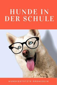 Hundgestützte Pädagogik ist ein Bereich, der leider noch viel zu wenig Beachtung findet. Nach dem Klick erfährst Du mehr darüber