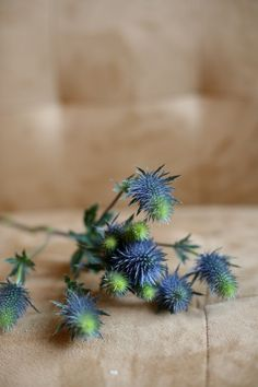 """Eryngium (thistle)-- I never thought to put this in arrangements.  It is a really interesting texture, and some varieties grow as """"weeds"""" in my garden."""