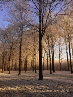 foto-park-rene-30-december