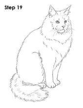Maine Coon Cat Drawing 19 - fonts and templates - Katzen Cat Whisperer, F2 Savannah Cat, Cat Sketch, Norwegian Forest Cat, Cat Drawing, Drawing Ideas, Drawing Step, Maine Coon Cats, Drawing Techniques