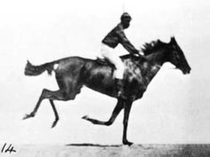 """Sallie Gardner at Gallop"" by Eadward Muybridge in 1878. Consists of 24 photographs in a fast-motion series shown on zoopraxiscope."
