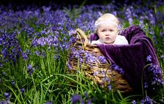 {Babe in the Bluebells – Family Photographer Surrey} bluebell portraits baby caterpillar woods spring