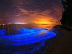 This is Jervis Bay Australia Bioluminescence, not Mosquito Bay, Vieques, Puerto Rico. Maldives Beach, Visit Maldives, Isla Vaadhoo, Jervis Bay Australia, Bioluminescent Plankton, Dark Beach, Blue Beach, Riviera Nayarit, Wallpaper Quotes
