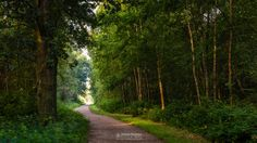 Photo Path In The Green in nature reserve Reindersmeer part of National Park De Maasduinen by William Mevissen. Landscape and…