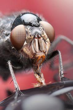 Makrofotografie von Dmitriy Yoav Reinshtein – Insekten | KlonBlog