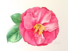Pink Camellia  Original Watercolor Botanical Painting by pswyatt