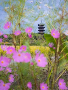 Kokubun-ji #japan #okayama