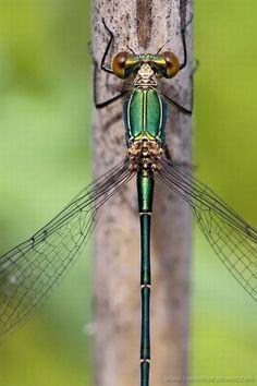 Metallic ➖➖➖➖➖➖➖➖➖ Insect ➖➖➖➖➖➖➖➖➖ Macro ➖➖➖➖➖➖➖➖➖ 589f8cf99e328c1e7b98a16262dba158.jpg 500×751 pixels