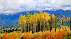 5 Fall Days in Winter Park - Venture Out Fall Days, Autumn Day, Winter Park Resort, Terrain Vehicle, Continental Divide, Relaxing Day, Rocky Mountain National Park, National Parks, Tours