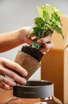 Unsere Pflanz mich - WunderGläser sind kleine Erlebnisse die bleiben. Du erhältst von uns alle Komponenten, die du für dein WunderGlas benötigst, inklusive Pflanzanleitung. Planter Pots, Videos, Fine Dining, Plant In Glass, Water Plants, Home Decor Accessories, Video Clip, Plant Pots