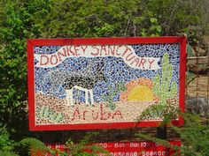 Visit Donkey Sanctuary, Aruba I don't see many donkeys, so this would be awesome. #aioutlet #Aruba