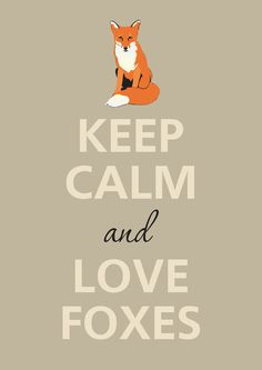 Keep calm and love foxes.