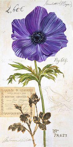Anemone – Angela Staehling love the color Botanical Illustration, Botanical Prints, Illustration Art, Vintage Diy, Vintage Paper, Flower Images, Flower Art, Vintage Pictures, Vintage Images