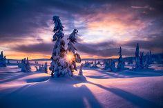 WINTER MORNING by Jørn Allan Pedersen on 500px  )