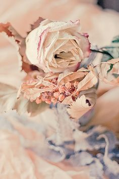 Soft Pink and Peach