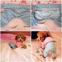 DIY Cute Pants for Dog