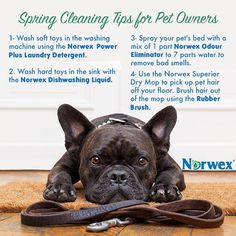 Do you feel better when your surroundings are clean and comfortable? There's a good chance that you do, and so do your pets! As you clean… Norwex Biz, Norwex Cleaning, Cleaning Hacks, Norwex Products, Cleaning Products, Cleaning Solutions, Pet Products, Do You Feel, How Are You Feeling