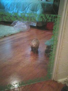 easy, cheap, simple ferret gate! | The Holistic Ferret Forum