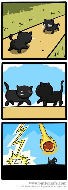 You Boycott Halloween to Save Black Cats (#superheroalert for @blackcatrescue #adopt)