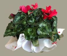 """13 Beğenme, 2 Yorum - Instagram'da Nesrincik (@nesrin_kefeli): """"#fotoselect #makro #macro #cicekler #flowers #flowerstagram #doğa #nature #aranjman #arrangement…"""""""