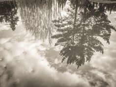 Reflection by Johann Kruger, Photography, Digital The Fragile, Close Proximity, Natural Garden, Nature Reserve, Reflection, Clouds, Earth, Fine Art, Landscape