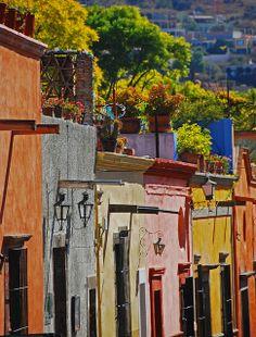 Roof gardens in San Miguel de Allende.