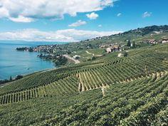Lausanne Switzerland Les Terrasses de Lavaux Lausanne, Visual Diary, Vineyard, Outdoor, Terraces, City, Vine Yard, Outdoors, Vineyard Vines