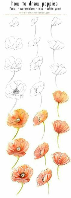 20 Delicate Colorful Watercolor Flowers Painting Tutorials In Images 20 zarte bunte Aquarell Blumen malen Tutorials in Bildern Plant Drawing, Painting & Drawing, Watercolor Paintings, Drawing Flowers, Flowers To Draw, Poppy Drawing, Watercolor Water, How To Draw Poppies, Poppies Painting