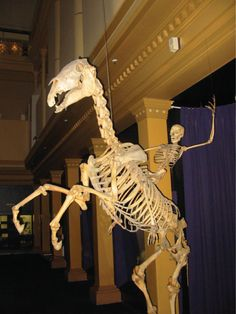 Funny pictures about Australian Museum. Oh, and cool pics about Australian Museum. Also, Australian Museum. Spooky Memes, Spooky Scary, Creepy, Dankest Memes, Funny Memes, Dead Memes, It's Funny, Videos Funny, Tumblr Stuff