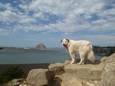 Dog Friendly Vacation Spots for Summer http://www.nylabone.com/dog-house-chatter/2012/05/21/dog-friendly-vacation-spots-for-summer/ #summer #vacation #dog