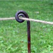 Fiddlehead fencing